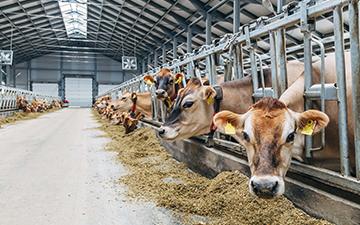 Gıda - Hayvancılık - Tarım